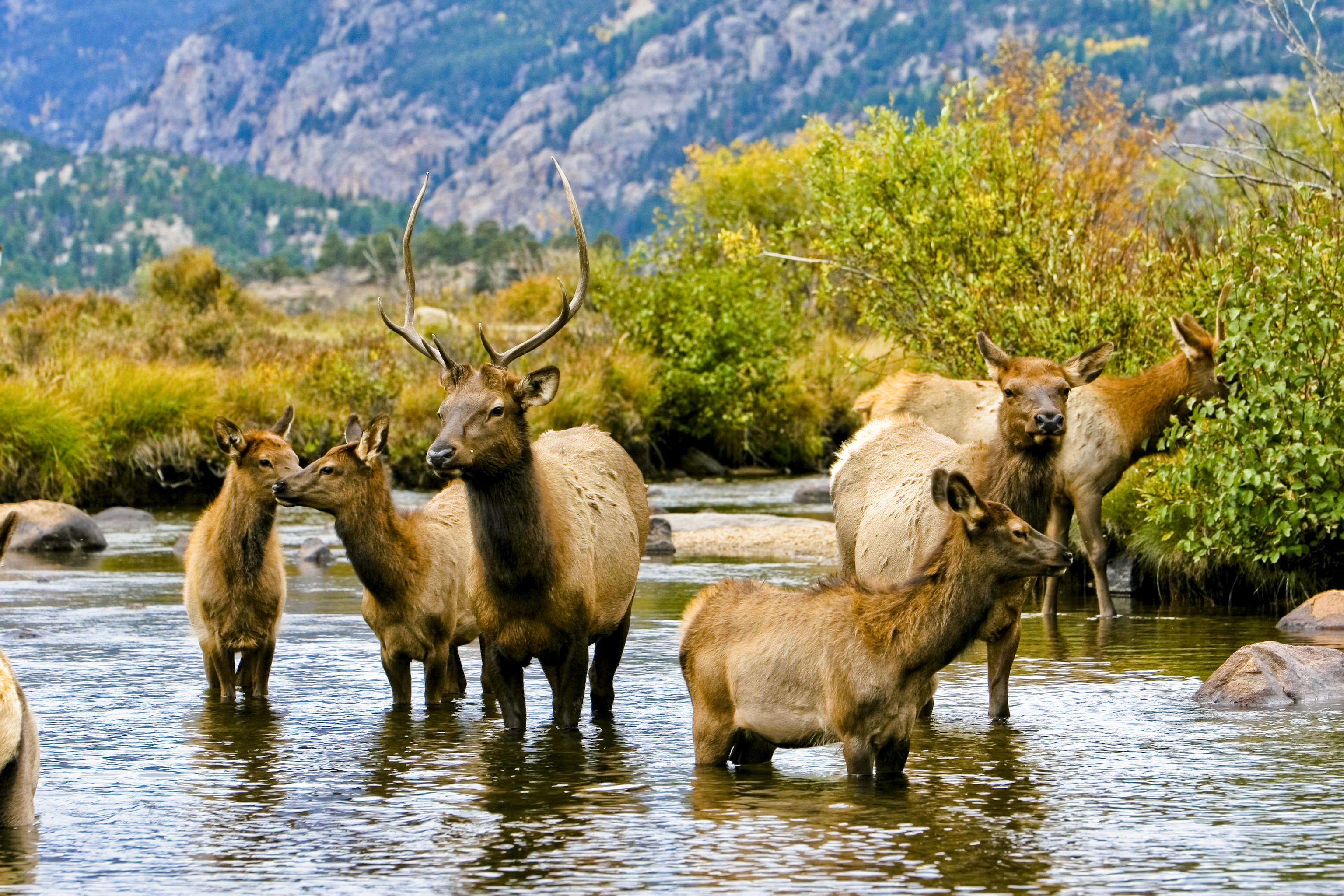 The Call of Nature; Yoho National Park, British Columbia