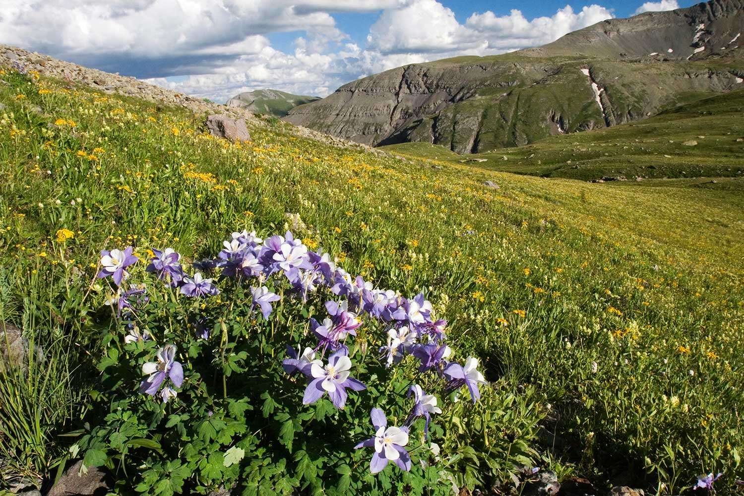 5 Colorado Wildflower Hikes Colorado