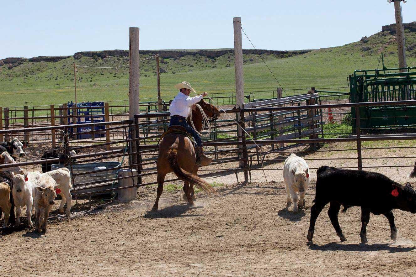 Natalie Parks Calhan Ranch Hands