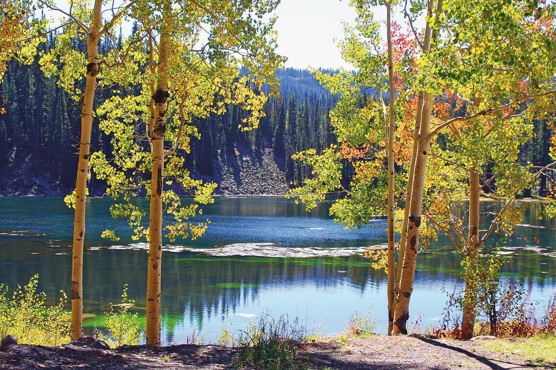 Hidden colorado gem grand mesa lakes for Camping and fishing in colorado