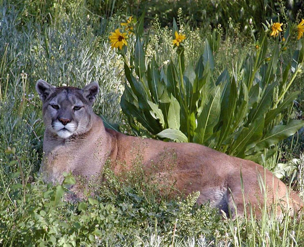 Colorado Wildlife Experiences | Colorado com