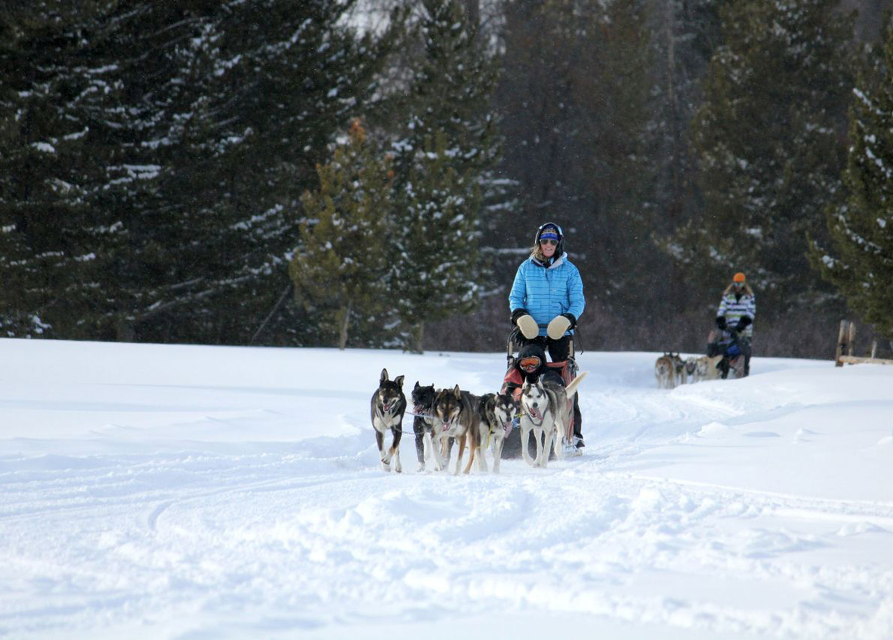 98b85b4958d Dog Sledding near Steamboat Springs