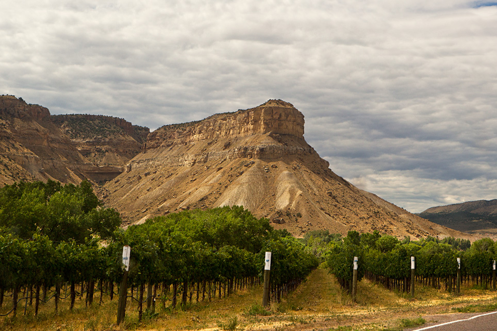 Palisade Fruit & Wine Byway